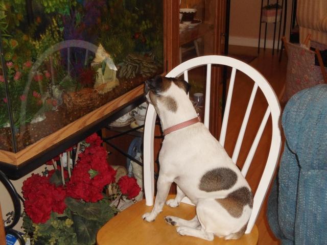 Cloe watching the fish