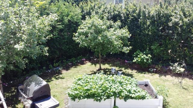 Back Garden day