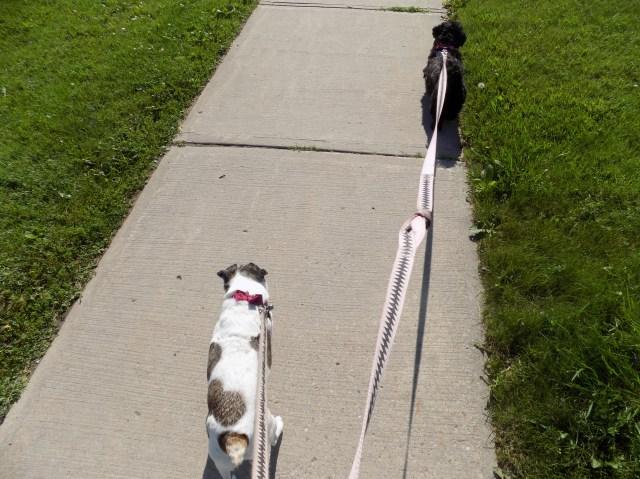 Dogs Walk 002