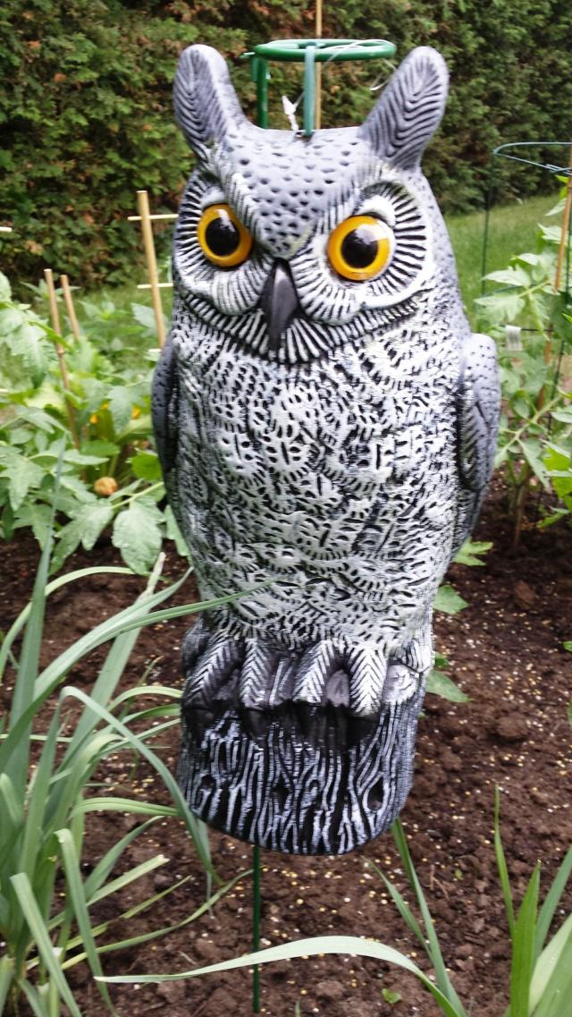 New l'Owl