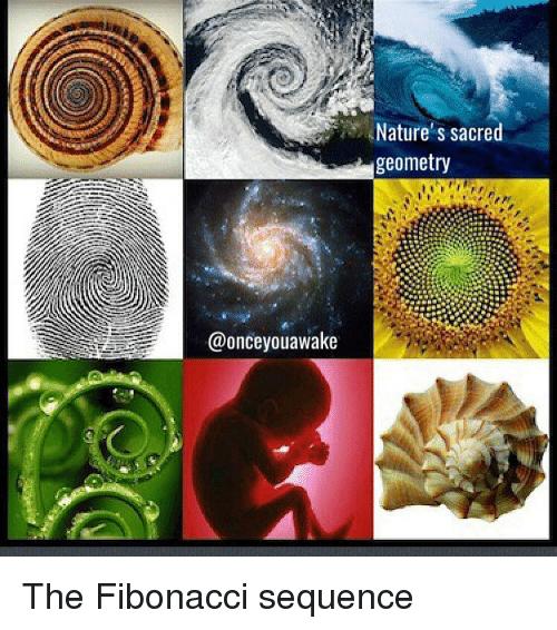 onceyouawake-natures-sacred-geometry-the-fibonacci-sequence-11721643