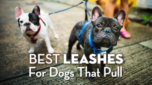 leashes-for-dogs-that-pull-01