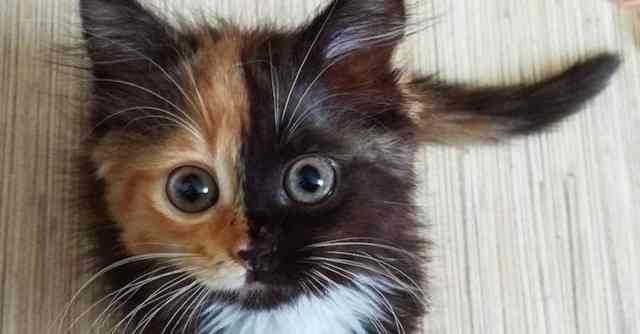 yana-two-faced-cat-thumbnail